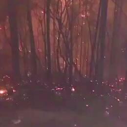 En mobilfilm inifrån skogarna som brinner visar gnistregnet och de sönderbrända träden.