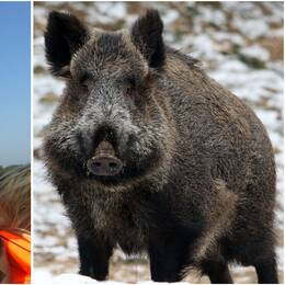 Porträttbild på Oskar Danielsson som ler och har en keps. I bilden bredvid står ett vildsvin.
