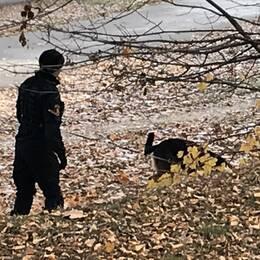polisman med hund utomhus