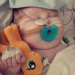 En delad bild på Walder i sjuksängen och föräldrarna Nicklas Johansson och Isabelle Norgren.