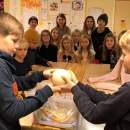 skolbarn visar strutsägg på svärtingehus utanför norrköping