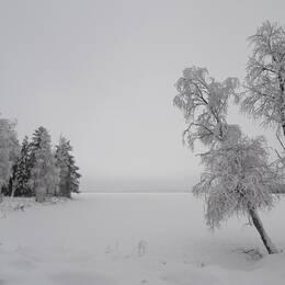 Söndag eftermiddag kl. 14, -3 gr. En vindstilla dag i Jänkisjärvi Norrbotten.