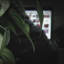 närbild på blad på krukväxt, i bakgrunden skymtar person vid dator
