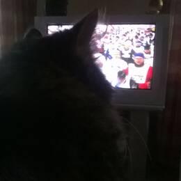 Katt kollar på Vasaloppet.