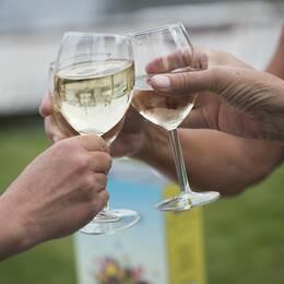Vin från bag-in-box i glas.