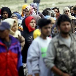 Boende i ett migrantläger i Idomeni, Grekland, köar för att få mjölk.