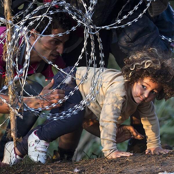 Ett barn kryper under stängslet mellan Serbien och Ungern.