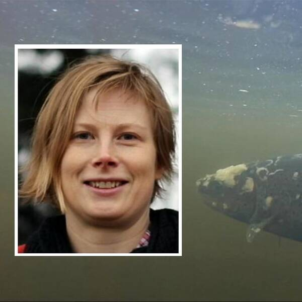 Charlotte Axén, tf statsveterinär på Statens veterinärmedicinska anstal, har tagit prover på smittade fiskar i Ljungan.