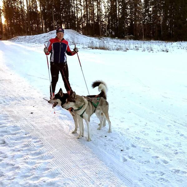Tior och Volki startar i draghunds-sm under SM-veckan i Söderhamn.