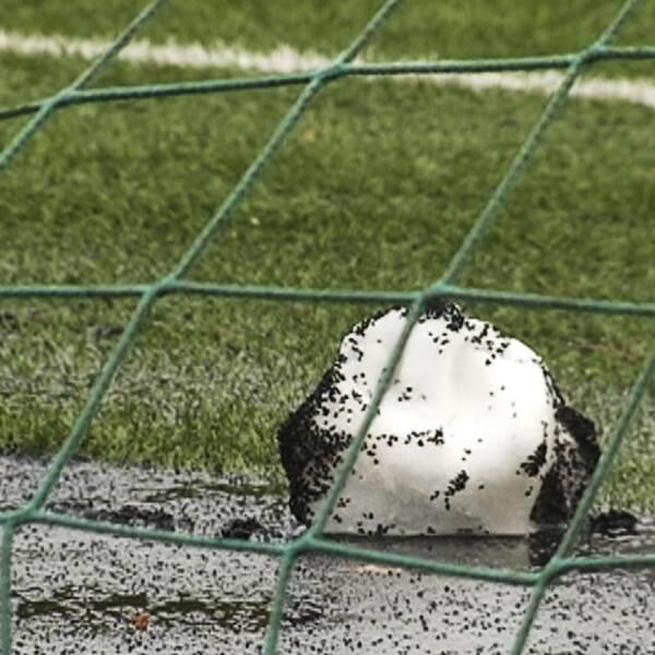 Snöboll full med gummigranulat från konstgräsplanen smälter på asfalten.