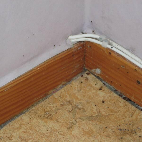Spår av vägglöss vid golvlist