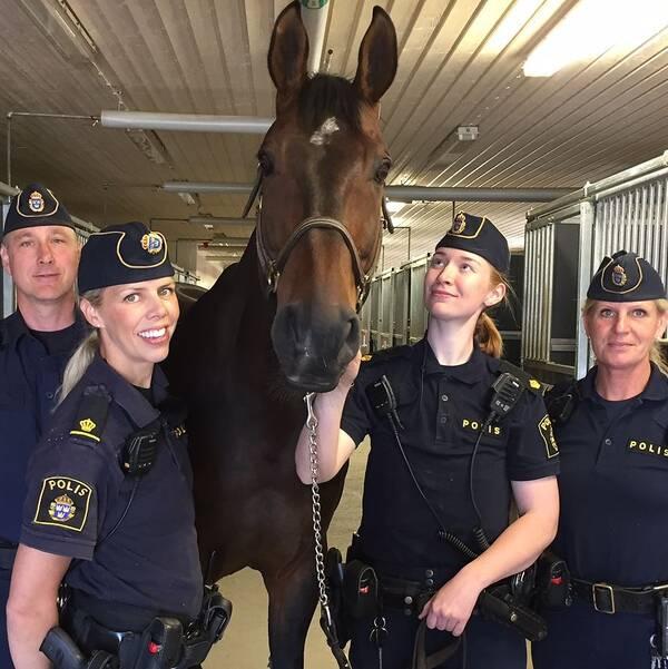 Polishäst och polisryttare från Stockholm.