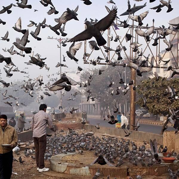 Forskare har nu lyckats göra fågelinfluensan luftburen, alltså mer smittsam.