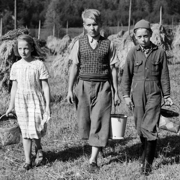 Fyra unga bärplockare i värmländska Gårdsjö den 9 september 1949.