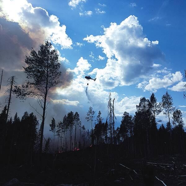 brandbilar på skogsväg, och en helikopter som som flyger över brinnande skog och släpper vatten