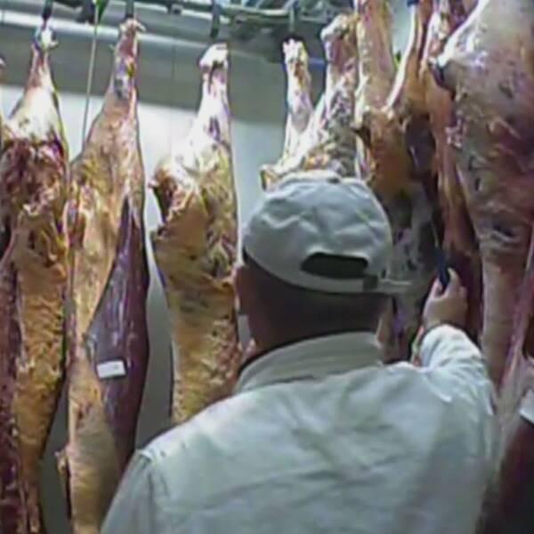 I det polska slakteriet skars sjuka delar bort och köttet kvalitetsmärktes, enligt tv-bolaget TVN24.