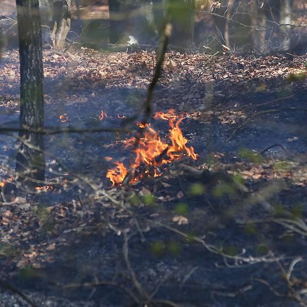 Räddningstjänsten som bekämpar en skogsbrand i Bökestad i östra Skåne under annandag påsk.