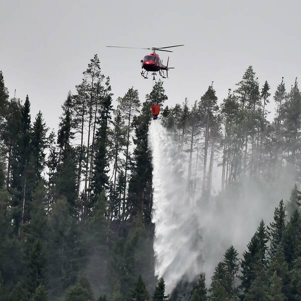 En röd helikopter släpper vatten över skog.