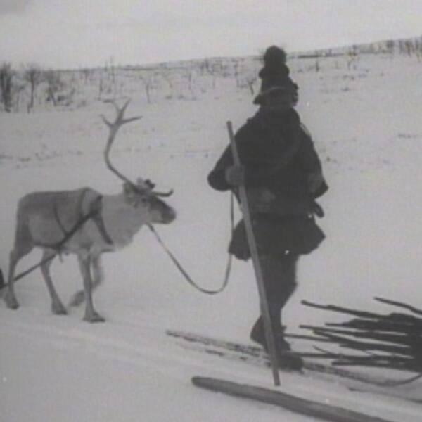 Ett bildkollage med en same med ren och Sigrid Stångberg från Vappsten lappby.