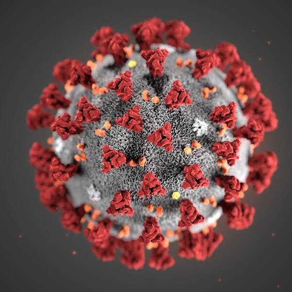En modell av Corona-viruset