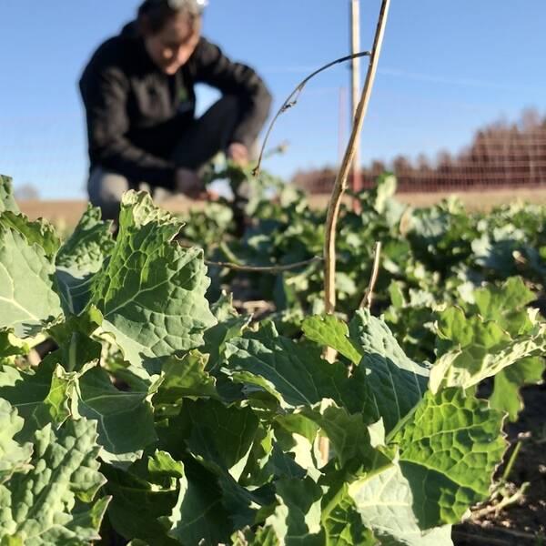 Läget för länets spannmålsbönder ser bra ut inför vårbruket
