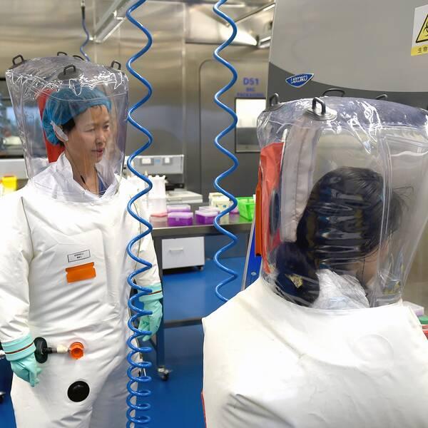 Virologer som arbetar med sjukdomsframkallande virus i Wuhans institut för virologi.