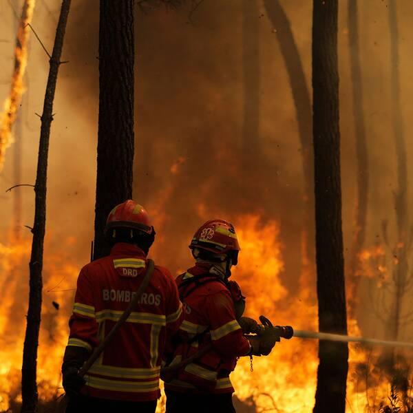 Hundratals brandmän bekämpar skogsbränder i Portugal