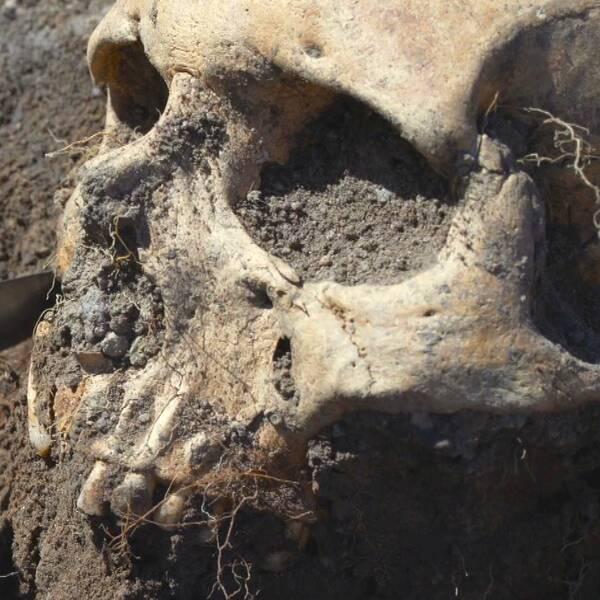 emma karlsson arkeolog Östergötlands museum skänninge galgbacken