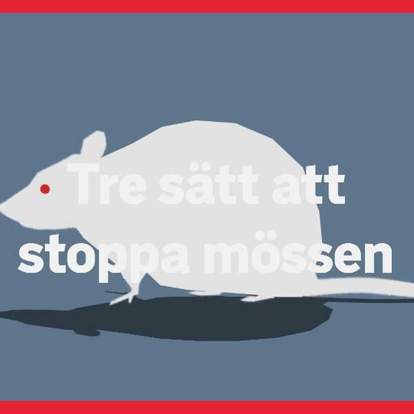 Per Samuelsson från Anticimex berättar vad man själv kan göra för att slippa få in möss.