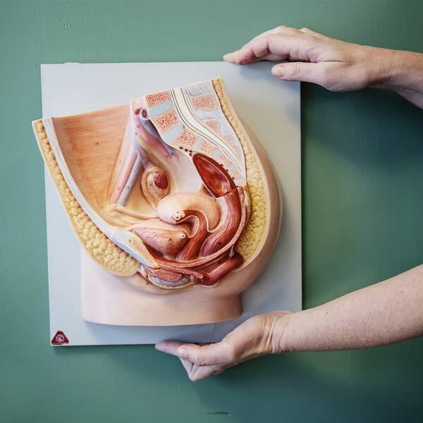 Anatomisk modell över en kvinnas underliv och gynekologen, överläkaren och forskaren Helena KoppKallner.