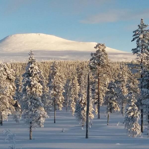 ett fjäll med massa snö, i solljus. framför står flera snöklädda träd