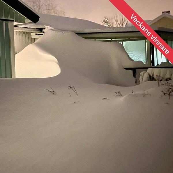 Vinndarbild vecka 22021 från Österalnäs, Ångermanland, 12 januari.