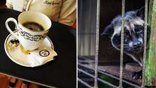 köpa kopi luwak sverige