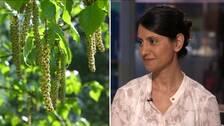 Pollen och Allergiläkaren Mohanna Alavi
