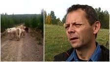 Ett kollage med en bild på kor som går längs en grusväg och Mikael Jonasson, bonde.