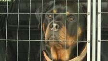 En hund som sitter i en bur