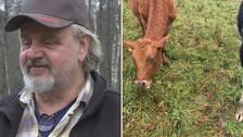 Bengt Borgström, mjölkbonde i Älvängen, har haft sina kor ute på bete ovanligt länge i år.