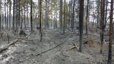 förödelsen efter skogsbranden i Godegård norr om Motala