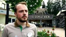 Rickard Sjödén, pressansvarig på Kolmårdens djurpark.