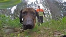 Viltspårningshunden Sniff med sin husse, eftersöksjägaren Johan Bohlin.