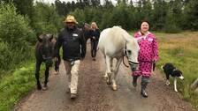 Hästerapi. Hästpromenaderna äger rum i naturen för att skapa lung hos deltagarna. Från vänster: Glenn Henner med hästen Sammy, Henrika Jormfeldt med hästen Manyana och Linda Svensson med hästen Aylah.