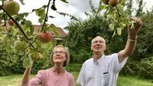 En kvinna och en man sträcker sig mot ett äppelträd.