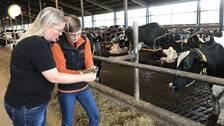 Maria Berglund, forskare på Hushållnigssällskapet i Halland, och Susanne Bååth Jacobsson, rådgivare på Växa Sverige, undersöker kofoder.