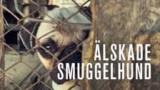 Älskade smuggelhund