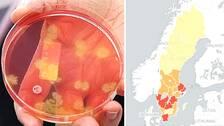 Provplatta med bakterieodling. Karta där länen är markerade med olika färger.