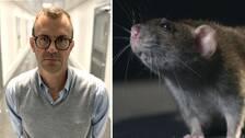Magnus Johansson, som är divisionschef och överläkare på Region Sörmland, menar att de flesta råttbetten på människor orsakas av tamråttor.