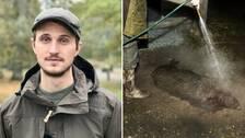 Till vänster Jonathan Lilja ståendes utomhus i mörkgrön regnjacka och jägarkeps. Till höger ett dött vildsvin utomhus på marken som spolas med en slang av en person ståendes bredvid.
