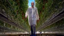 Vattenforskaren går runt i ett klimatkontrollerat växthus