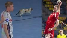 En katt avbröt VM-matchen mellan Norge och Schweiz.