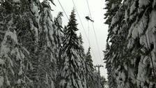 Helikopter röjer ledningar från nedfallna träd